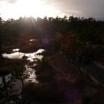 muskeg-sunset